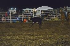 IL rodeo0513