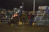 IL rodeo0884